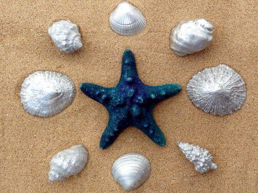 Silver Shells Lanzarote