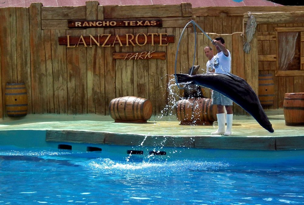 Rancho Texas Lanzarote Park celebrates the Canary Islands Day
